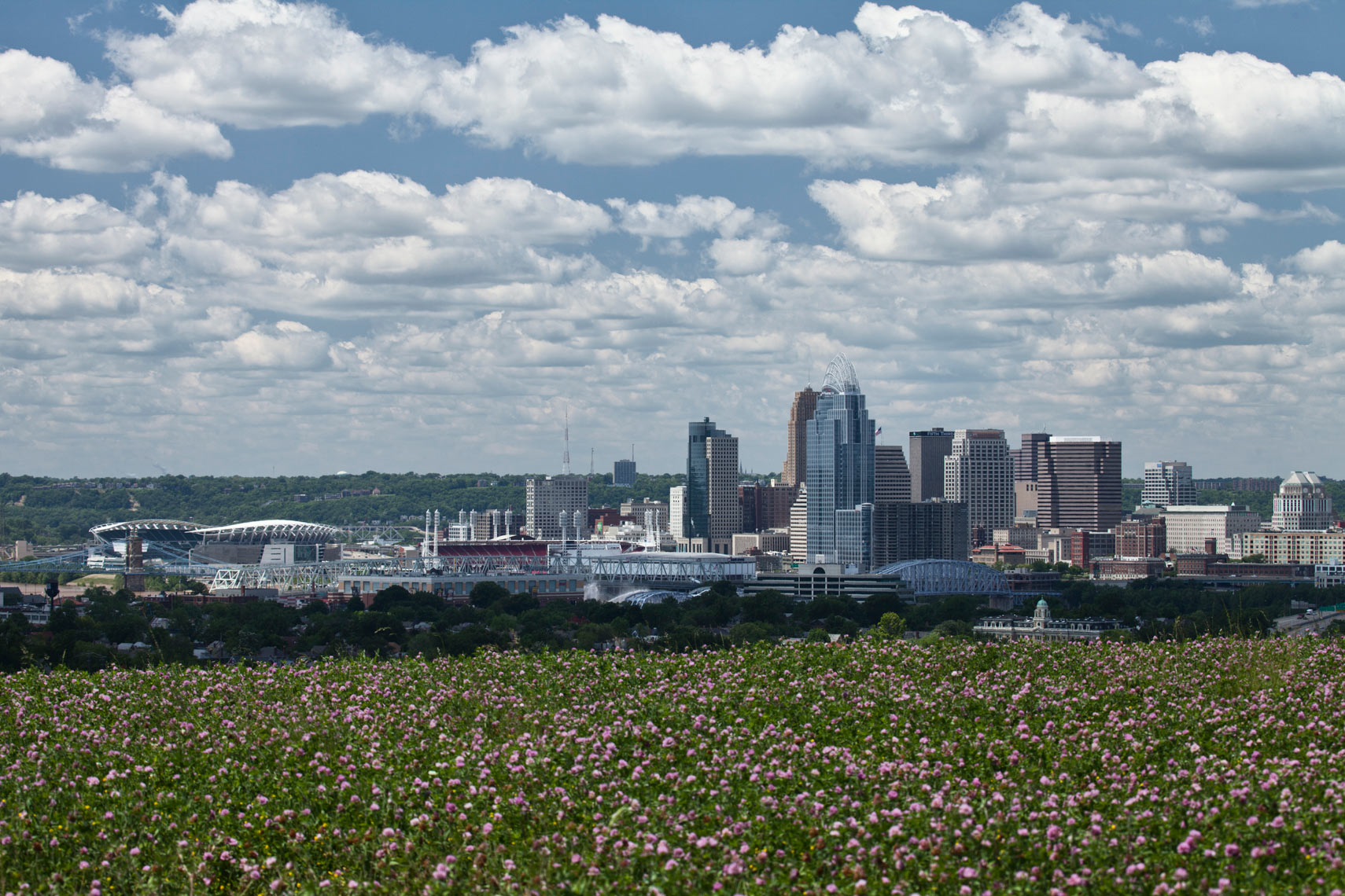 Cincinnati_Art_Cityscape_Flowers